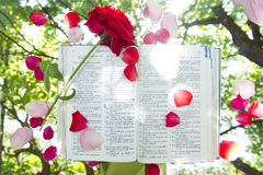 Bibbia d'ardore aperta in natura Fotografie Stock Libere da Diritti