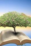 Bibbia dell'albero della vita Fotografia Stock Libera da Diritti