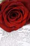 Bibbia e Rosa Immagini Stock