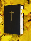 bibel Heilige Bibel mit gefallenem Herbstlaub Lizenzfreie Stockbilder