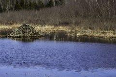 Biber-Häuschen-Teich stockfoto