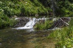 Biber-Verdammung auf Huntington-Nebenfluss in Emery County Utah lizenzfreie stockfotografie