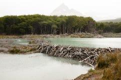 Biber-Verdammung - Tierra Del Fuego - Argentinien lizenzfreies stockbild