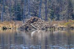 Biberhäuschen im Adirondack-Park Lizenzfreies Stockfoto