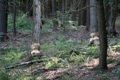 Biberkennzeichen in den Bäumen Lizenzfreie Stockfotos