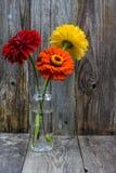 Biberon de zinnias Image libre de droits
