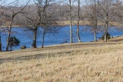 Biberschaden eines Baums neben einem kleinen See, Winter stockbilder