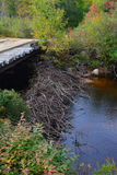 Biberverdammung unter Brücke Stockfoto