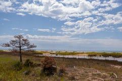 Bibione strand fotografering för bildbyråer