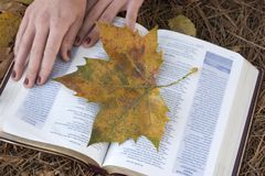 Bible Photo stock