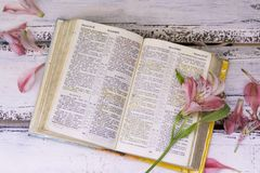 Bible book on wooden background. The flower lies on the book royalty free stock image