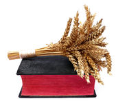 Bible and ears of wheat on a white background Royalty Free Stock Images