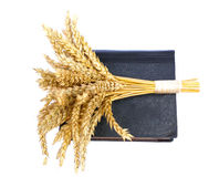 Bible and ears of wheat on a white background Royalty Free Stock Photos