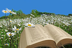 Bible message of hope and peace Stock Photo