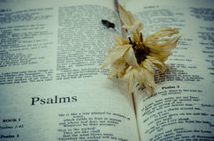 Bible : Psalms Royalty Free Stock Photos