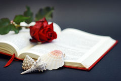 Bible reading Royalty Free Stock Image