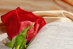 Bible and rose, love concept and background Royalty Free Stock Photo
