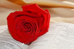 Bible and rose, love concept, close up Royalty Free Stock Images