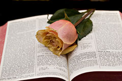 Bible and roses Royalty Free Stock Image