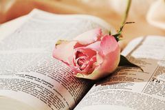 Bible and roses Royalty Free Stock Photography