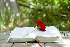 Bible rougeoyante ouverte avec Rose rouge images stock