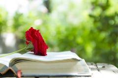 Bible rougeoyante ouverte avec Rose rouge crue photos libres de droits