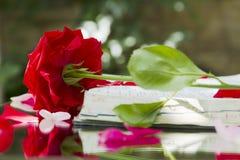 Bible rougeoyante ouverte en nature photo stock