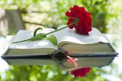 Bible rougeoyante ouverte en nature photo libre de droits