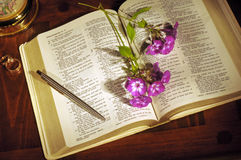 Bible still life. Bible open to Song of Solomon with flowers, pen, and wedding rings Stock Photos