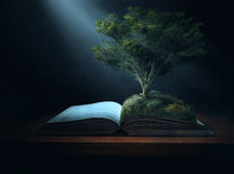 Bible Tree Royalty Free Stock Images