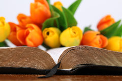 Bible and tulips Stock Image