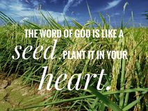 Seed of God of words from the bible verse of the day, be encouraged in daily life design for Christianity. royalty free stock photo