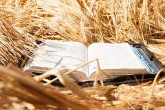 Biblia w spikelets polu Fotografia Stock