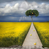 Biblical apple of temptation. To the apple tree there is a narrow path. In the background, a thunderous beautiful sky Stock Photos