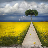 Biblical apple of temptation. To the apple tree there is a narrow path. In the background, a thunderous beautiful sky Stock Photo