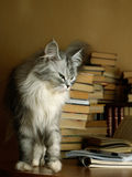 Bibliophile stockfotos