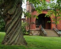 Biblioteca torcida del árbol y de la ciudad Imagen de archivo