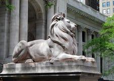 biblioteczny lew Zdjęcie Royalty Free