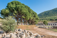 Bibliothek von Celsus und von grünen Kiefern in Ephesus Stockfotos
