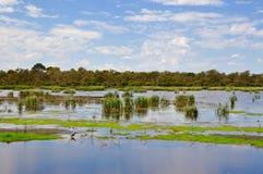 Bibra湖风景:保存沼泽地 库存照片
