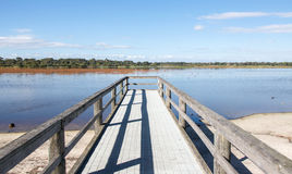 Bibra Lake Jetty Perspective. Bibra Lake calm wetland landscape with native trees, jetty in diminishing perspective and floating vegetation under a blue sky in Stock Image