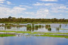 Bibra Lake Landscape: Save the Wetlands stock photos