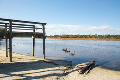 Bibra Lake Wildlife Royalty Free Stock Photos