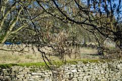 Bibury wioska w cotswolds z drzewami i traw? obraz royalty free
