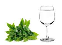 Bicchiere d'acqua e foglie di tè su fondo bianco Fotografia Stock