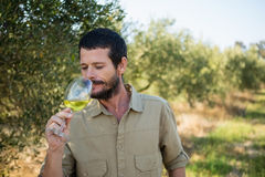 Bicchiere dell'agricoltore di vino nella fabbrica delle olive Fotografie Stock
