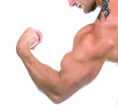 Bicep (isolated) Royalty Free Stock Photos