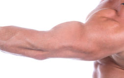 Bicep (isolated) Royalty Free Stock Image