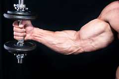 Bicep met handgewichten stock afbeelding