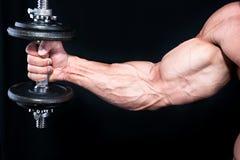 Bicep mit Handgewichten stockbild